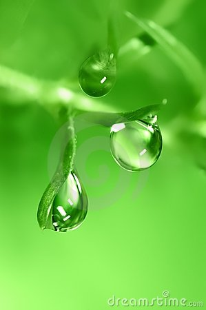 Water  Drop Stock Image - Image: 2447001