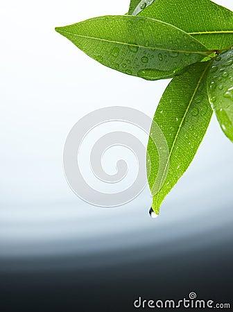 Free Water Drop Royalty Free Stock Image - 4976966