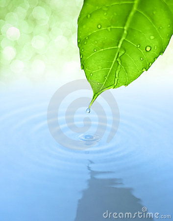 Free Water Drop And Leaf With Ripple And Reflection Stock Images - 14119784