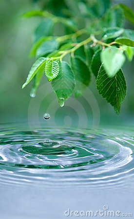 Free Water Drop And Wet Leaves Royalty Free Stock Photography - 15135267