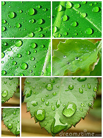Free Water Drop Collage Royalty Free Stock Images - 14772189