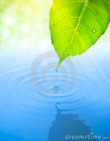 Free Water Drop Fall From Green Leaf With Ripple Royalty Free Stock Photos - 14165828