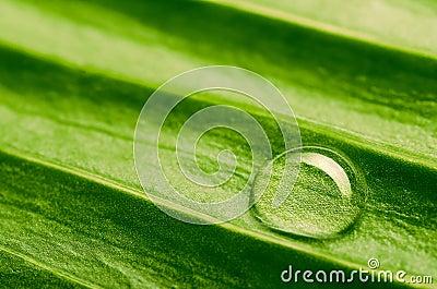 Water drop on fresh leaf