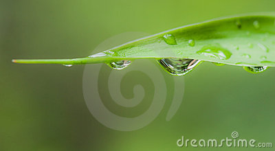 Water drop leaf