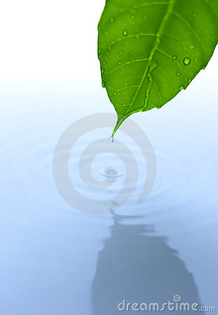 Water drop and leaf with ripple and reflection