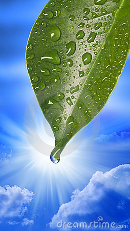 Free Water Drop Leaf Sky Royalty Free Stock Images - 20679109