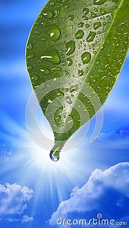 Water Drop Leaf Sky