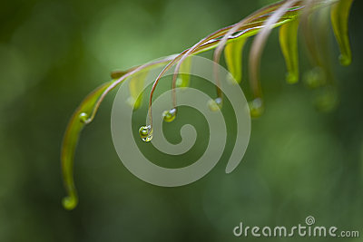 Water Droplet on a Fern Leaf