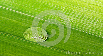 Water droplet on a tropical leaf background