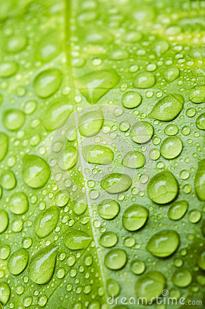 Free Water Droplets Royalty Free Stock Image - 25058976