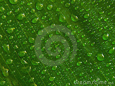 Water droplets green leaf