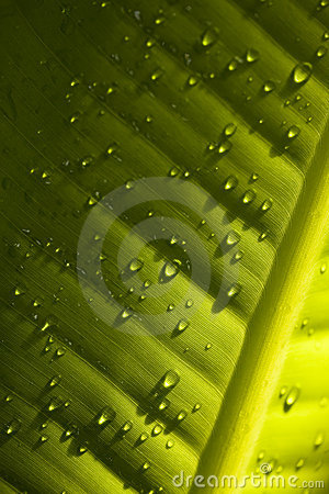 Water droplets on green leaf - detail
