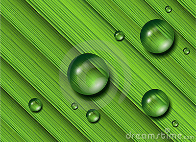 Water drops on green grass, .