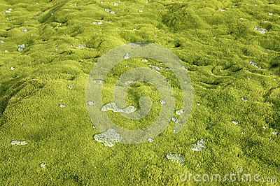 Water drops on green moss.