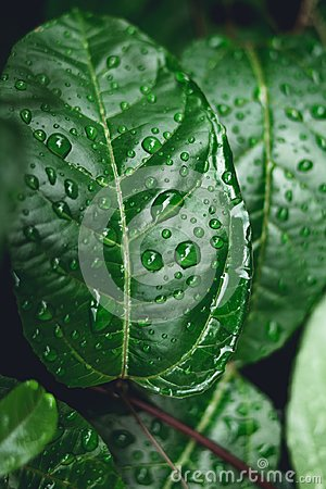 Free Water Drops On Leaves In Nature Stock Photos - 121249173