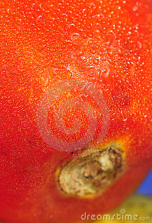 Water drops on tomato