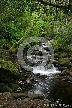 Water Fall of green