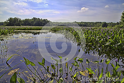 Water foliage with blue sky and reflections