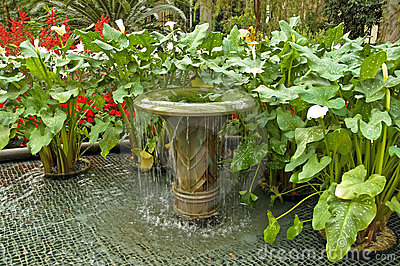 Water fountain and plants