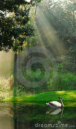 Free Water Fowl On Lake In Woods Stock Photo - 3299600