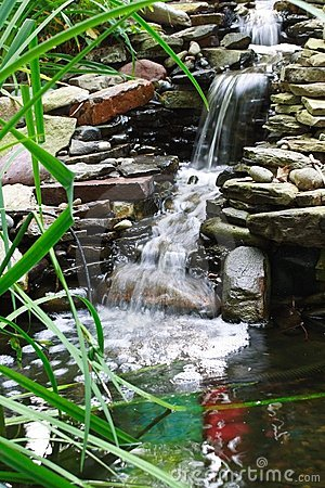 Free Water Garden Stock Photography - 1093142