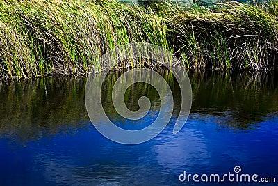 Water Grass 02