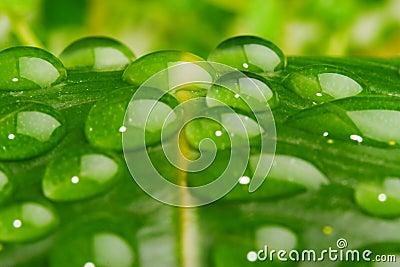 Water on leaf closeup