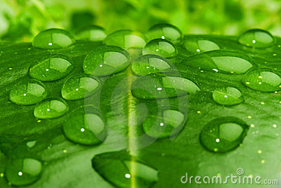Water on leaf closeup