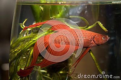 Water life fish