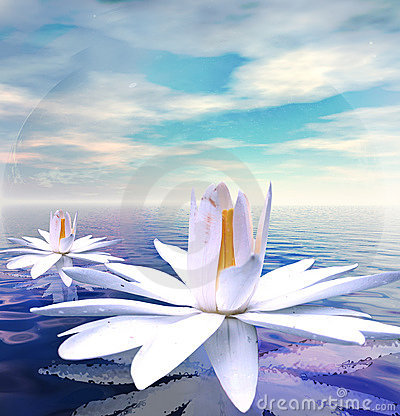Free Water Lilies Stock Photography - 2692122