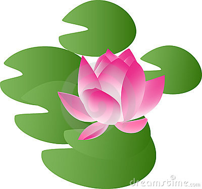 Free Water Lily Royalty Free Stock Photos - 5015388