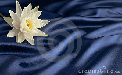 Water lily on blue satin