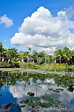 Water lily (lotus) pond