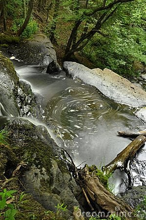 Water Movement, Forest Creek
