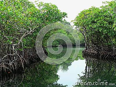 Water paths through the jungle, panama