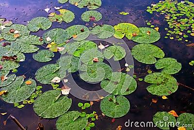 Water plants leafs on water