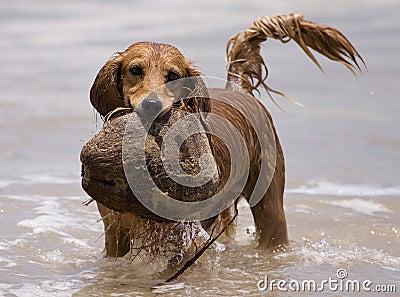 Water play dog