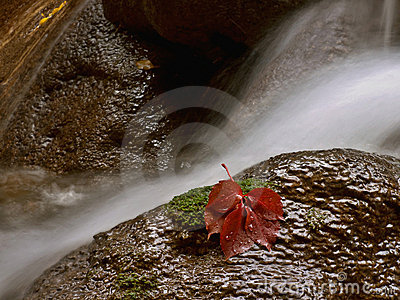 Water and red leaf