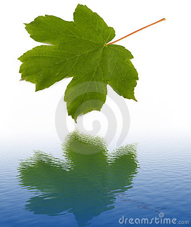Water reflection of green leaf