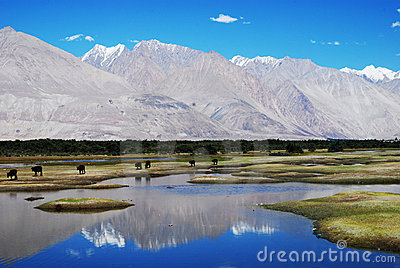 Water reflections, Ladakh, India