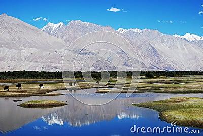 Water reflections, Ladakh, India