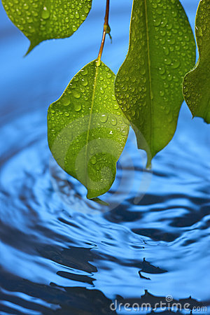 Water Ripples Leaf Fresh Background