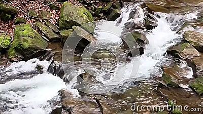 Water snel stock video