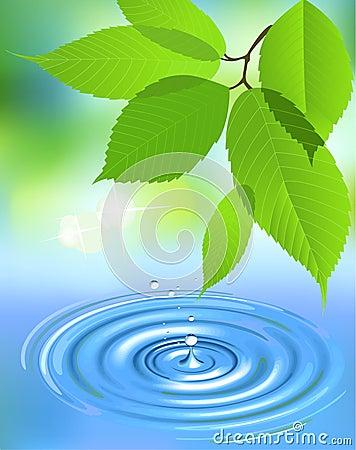 Water splash and leaves