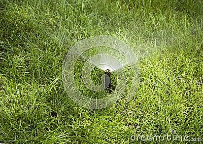 Water sprinkle