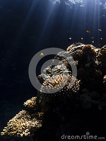 Water, sunbeams & corals