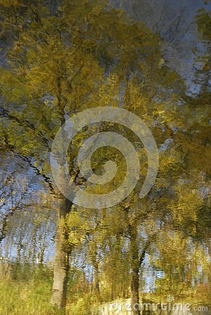 Free Water Surface With A Reflection Of The Leaves Of Autumn Yellow Trees And Blue Sky. Royalty Free Stock Photography - 104212917