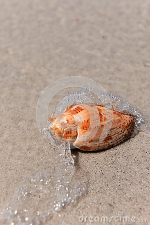 Water Waves Splashing on Seashell