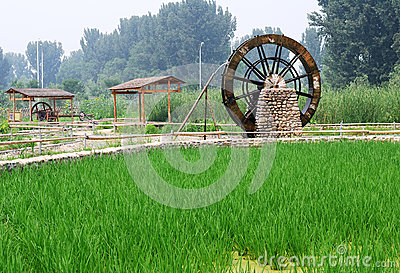 Water wheel and rice