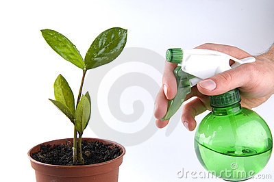 Water your own tree